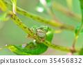 青蛙 繡球花 秸稈 35456832