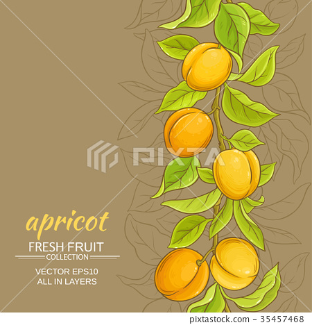 apricot vector background 35457468