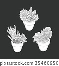house plant in pot set. 35460950