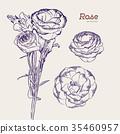 Purple and white rose flower. Vector illustration. 35460957