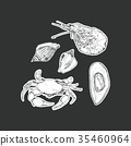 set of seafood ,isolated vector. 35460964