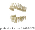 牙齒 齒輪 數碼成像圖片 35461029