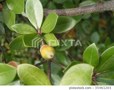 가을, 가로수, 나무열매 35461203
