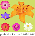 Yellow Lily Flower with Smaller Blossoms Poster 35465542