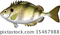fish, fishes, vector 35467988