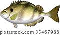 물고기, 벡터, 바위해변 35467988