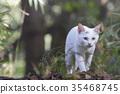 cat, pussy, white cat 35468745