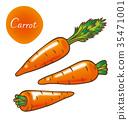 胡蘿蔔 蔬菜 黃綠色蔬果 35471001