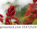 곤충, 벌레, 자연 35472526