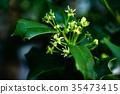 植物 植物學 植物的 35473415