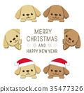 poodle, toy poodle, dog 35477326