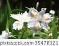 흰색, 꽃, 백색 35478121