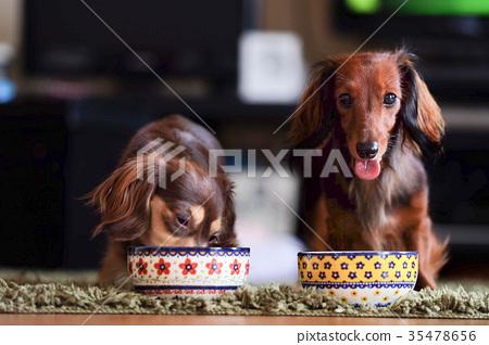 狗dax kaninhen小狗 35478656