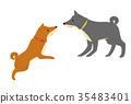 สุนัข,สุนัช,สัตว์เลี้ยง 35483401
