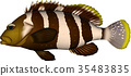 fish, fishes, vector 35483835