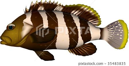 물고기, 생선, 벡터 35483835