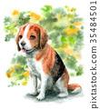 수채화로 그린 비글 강아지 35484501