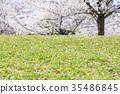 벚꽃, 봄, 꽃잎 35486845