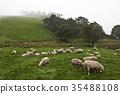 綿羊牧場 35488108