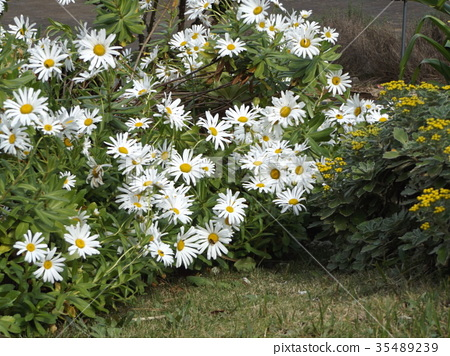 시월, 가을, 꽃 35489239
