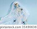 Spider skeleton 35490636