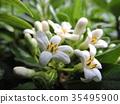 상록 관목, 꽃과 나무, 정원수 35495900