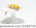 豹子mont牡蠣蛾豹子gekko爬行動物 35496759