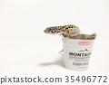 豹子mont牡蠣蛾豹子gekko爬行動物 35496772