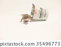 爬行動物 爬蟲類的 蠑螈 35496773