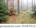 Autumn coniferous forest in the morning 35497015