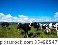 목장, 방목, 젖소 35498547