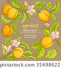 apricot, fruit, vector 35498622