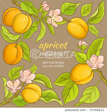 apricot vector frame 35498622