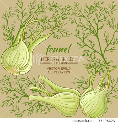 fennel vector frame 35498623