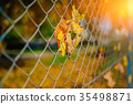 Close up metallic net-shaped fence from wire with  35498871