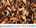 autumnal, botanic, botanical 35510484