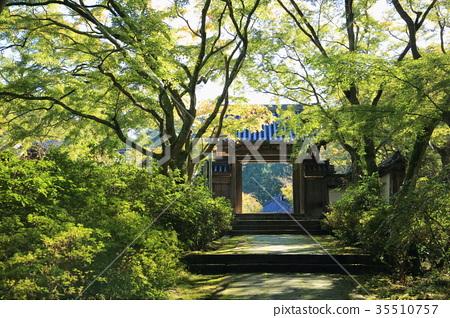 단풍나무, 산문, 총문 35510757