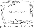 Hand Drawn of Leafy and Salad Vegetable 35513526