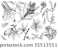 Hand Drawn of Leafy and Salad Vegetable 35513551