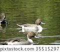 棕色 褐色 野生鳥類 35515297