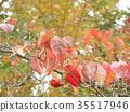 시월, 가을, 가로수 35517946
