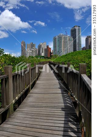 自然生態保護區,淡水紅樹林自然保留區,高樓大廈,藍天白雲,建築,雲,天空,樹,房子,建築物,自然 35517993