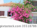 Flowers from the island of Skiatos in Greece 35518786
