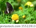 Black butterfly on flower 35522813