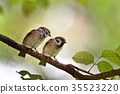 Two sparrows perched on a tree branch 35523220