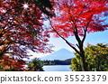 ใบไม้เปลี่ยนสีและฟูจิ (Kawaguchiko) 35523379