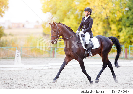 Equestrian sport event at fall with copy space 35527048