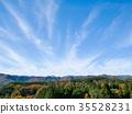 ป่า,ป่าไม้,ฤดูใบไม้ร่วง 35528231