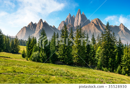 spruce forest in mountains with rocky peaks 35528930