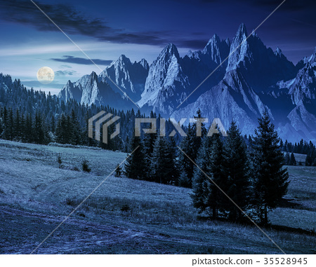 spruce trees on hillside in mountains at night 35528945